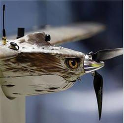 bird shaped UAV